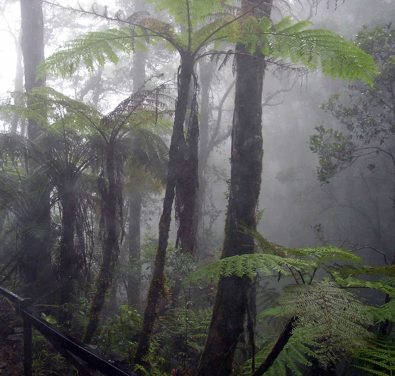 Review: Bella Vista Cloud Forest Reserve